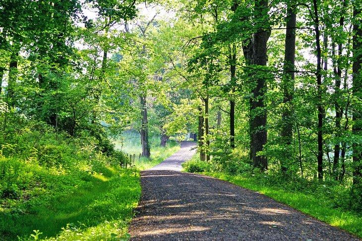 Carruaje a través del bosque en la Reserva del Parque Estatal Rockefeller