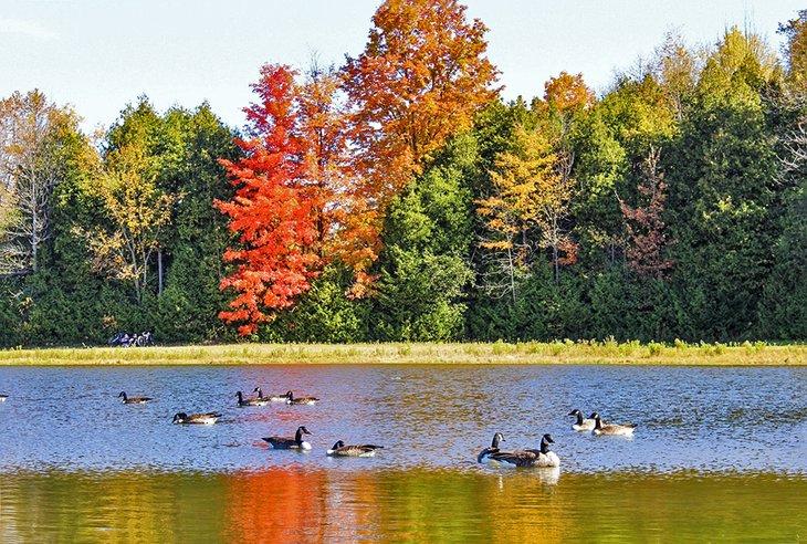 Un lago en Albion Hills