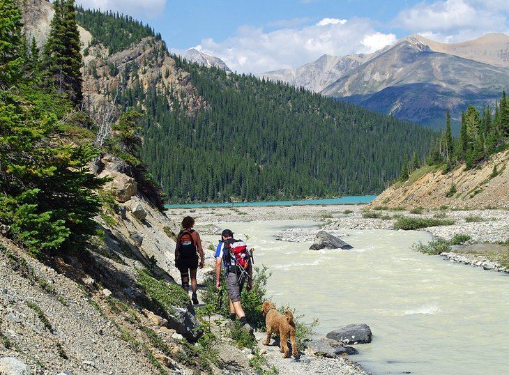 Hikers on the trail to Bow Glacier Falls