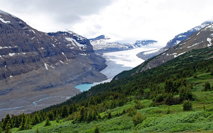 Glaciar Saskatchewan desde Parker Ridge