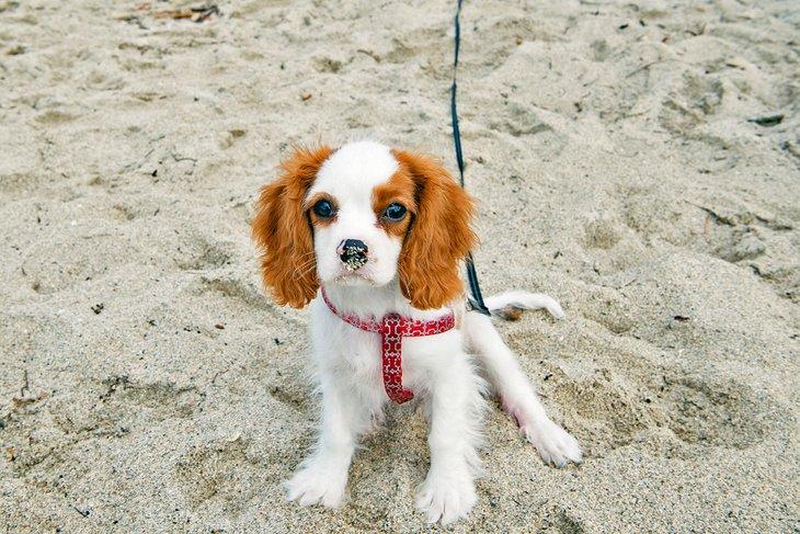 Cachorro en la playa de corteza