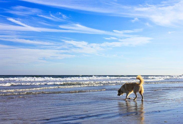 Playa Canova Dog