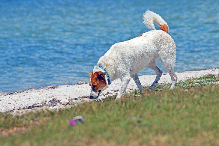 Playa para perros de Davis Island
