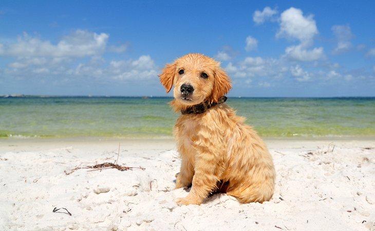 Cachorro, en la playa