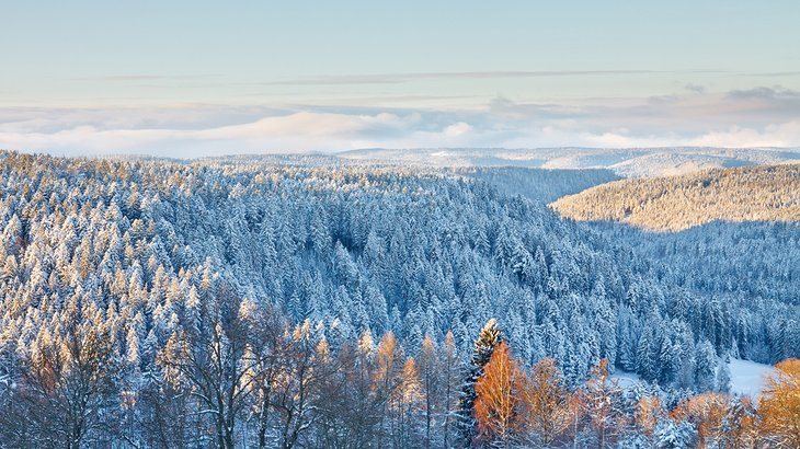Snow-covered trees in the Black Forest near Baden-Baden