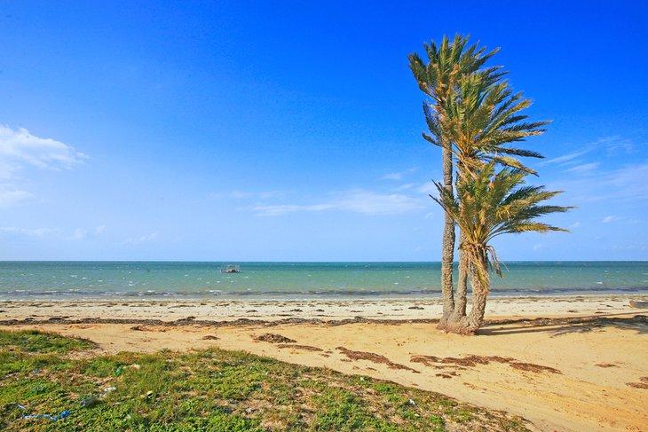 Palmeras en una playa en las islas Kerkennah