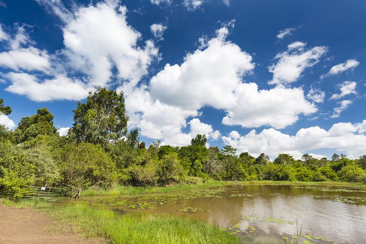 Lily Lake in Karura Forest Reserve