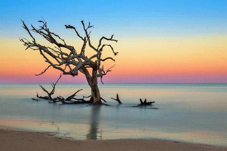 Playa Driftwood