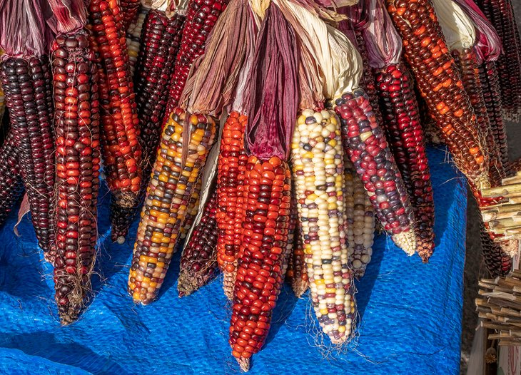 Colorful ears of corn at the farmers market