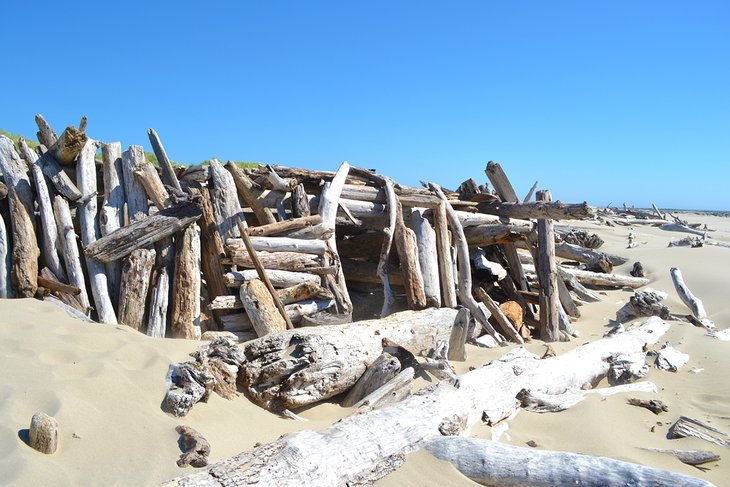 Massive driftwood log fort at Heceta Beach