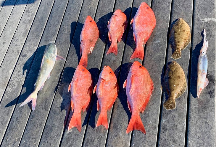 Variety of species caught in Panama City Beach