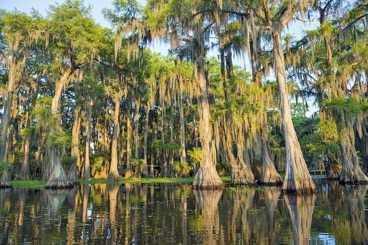 Pantano de Louisiana