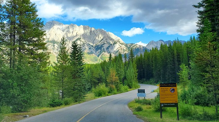 Peter Lougheed Provincial Park near Canyon Campground