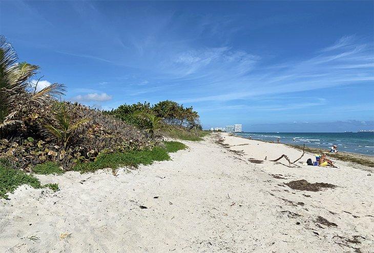 La playa del Parque Estatal Dr. Von D. Mizell-Eula Johnson