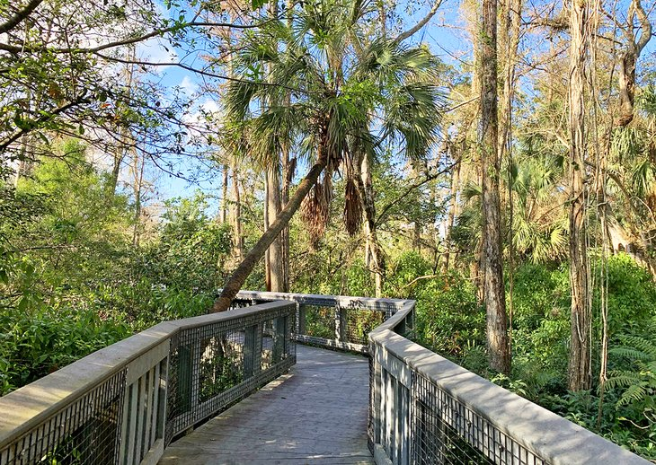 The boardwalk at Tall Cypress Natural Area