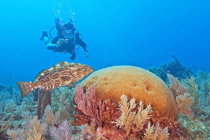 Diving off Key Largo