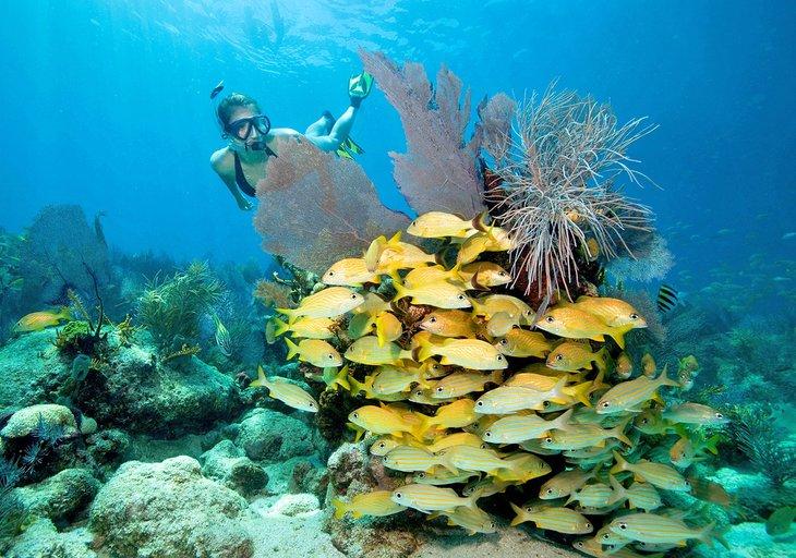 Buceador disfrutando del Santuario Marino Nacional de los Cayos de Florida