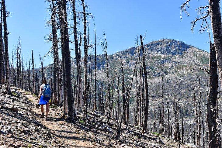 Caminata por el área quemada hasta Lolo Peak