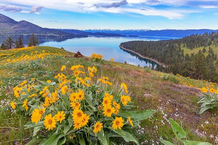 Flores silvestres en Wild Horse Island, Flathead Lake State Park