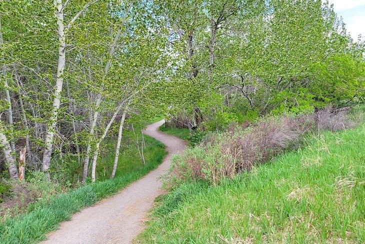 Sendero que atraviesa los árboles en Glen Lake Rotary Park