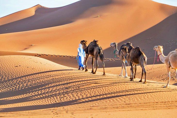 Paseo en camello en Erg Chigaga