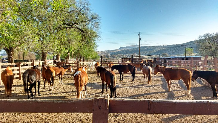 Caballos en Prude Ranch