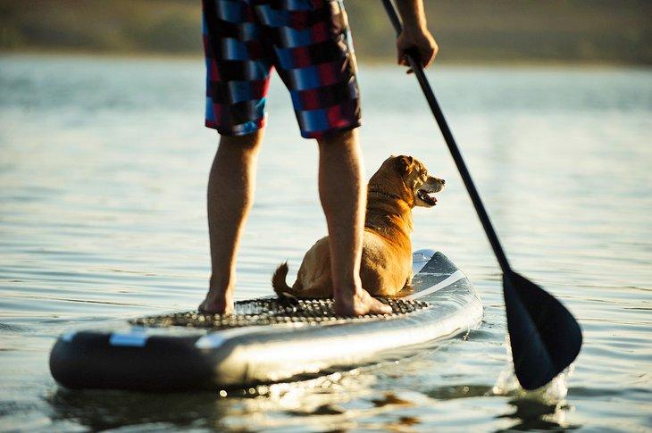 Diversión en el agua para el hombre y su mejor amigo.
