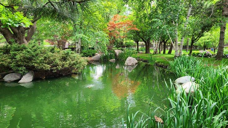 Un estanque en el parque Kariya